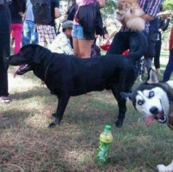 FUNNY DOG modified